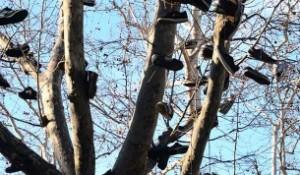 albero scarpe